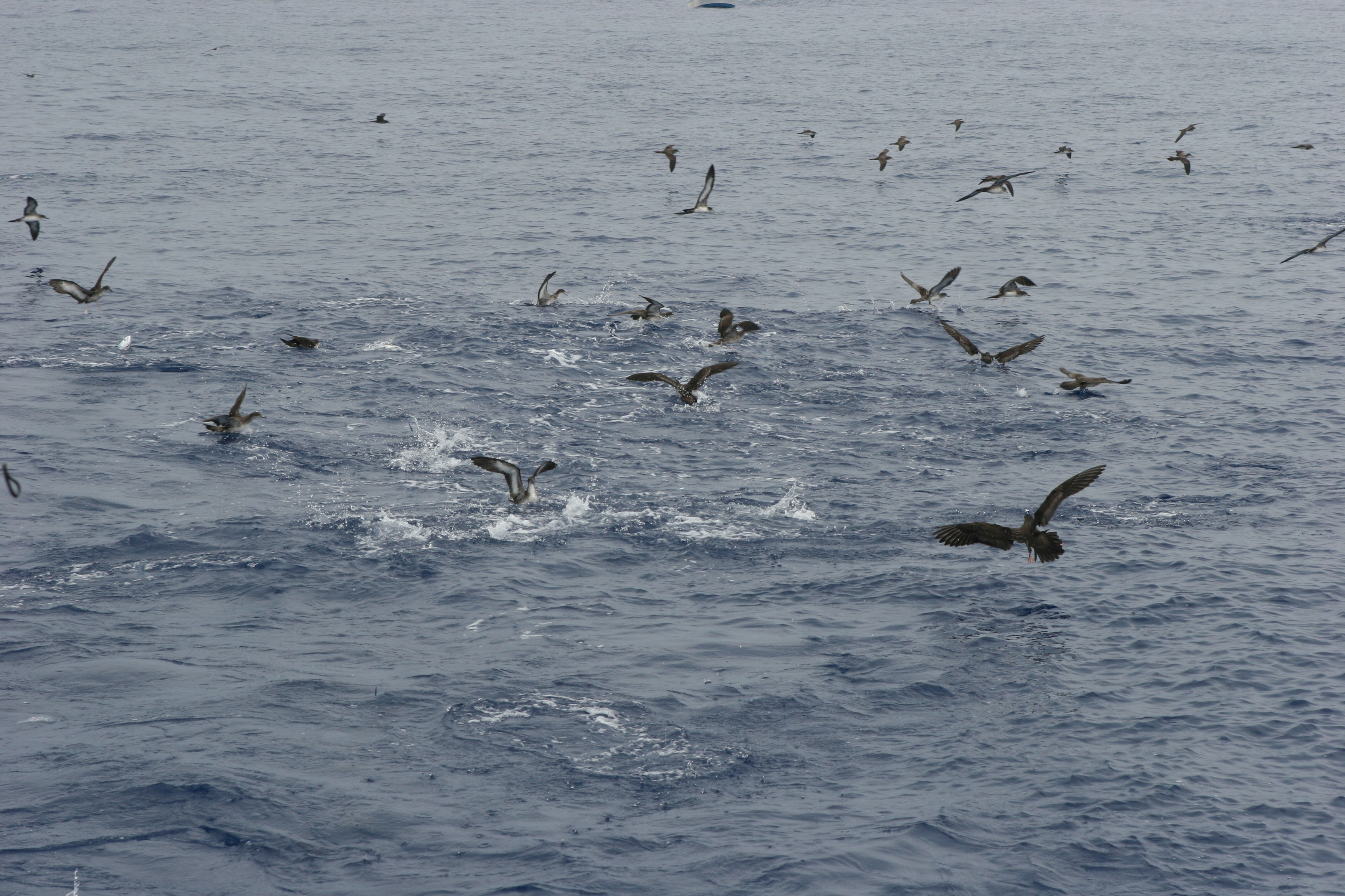 Hunting for marlin and spears fishing report for Hunting and fishing forecast